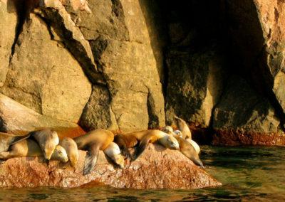 Sea Lion Pile - Photo: Leslie Robins