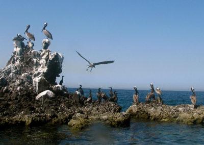 Sea of Cortex Pelican Rock - Photo: Leslie Robins