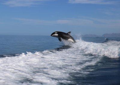 Marine Life in La Paz